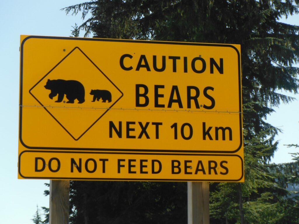 Belemmerende-overtuigingen-beren-op-de-weg